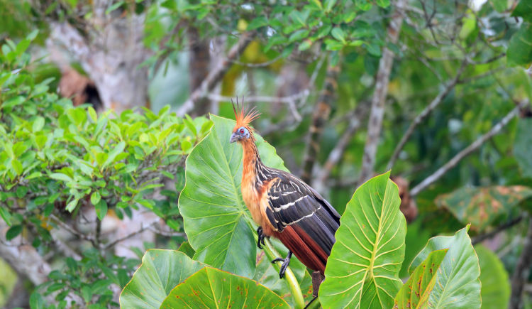 oiseaux Yasuni